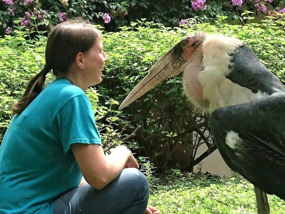 Marabou Stork Paulchen is happy