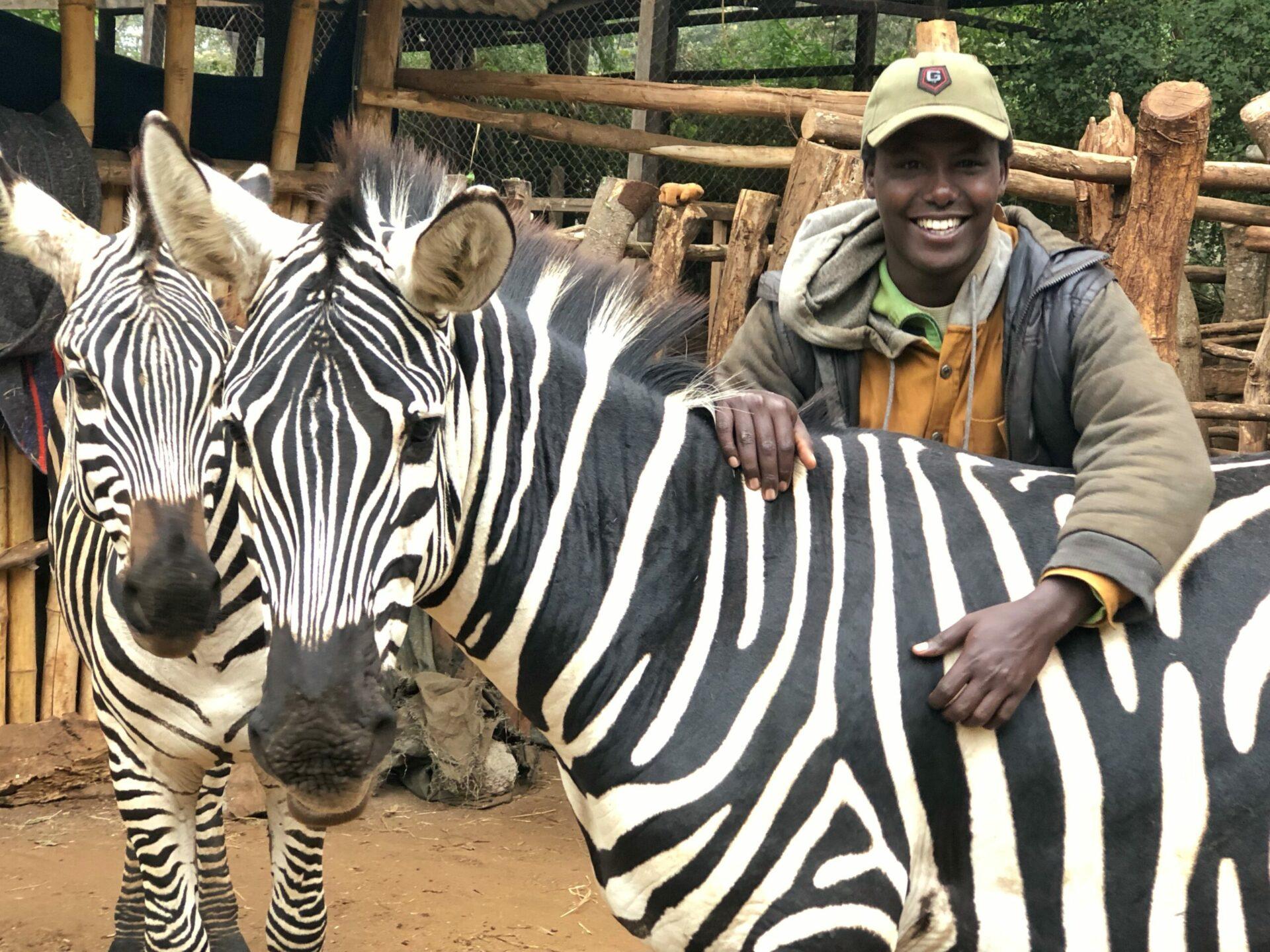 Plains Zebra Lerangwa